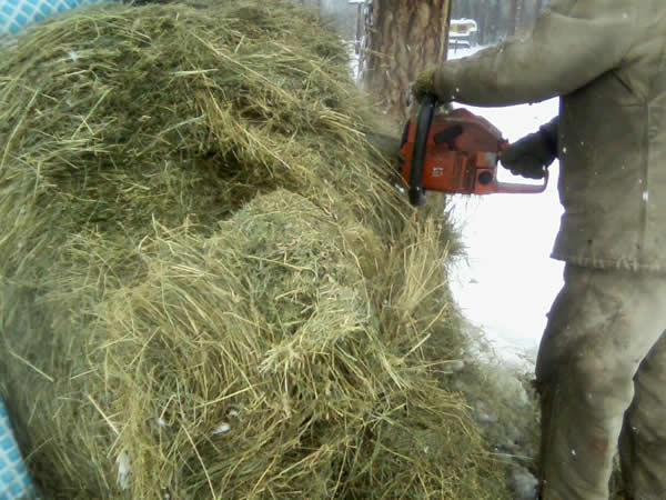 putting the saw in the round bale