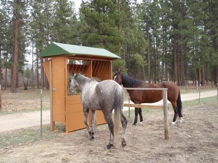 Horse Feeder Hay Pasture Fence Line
