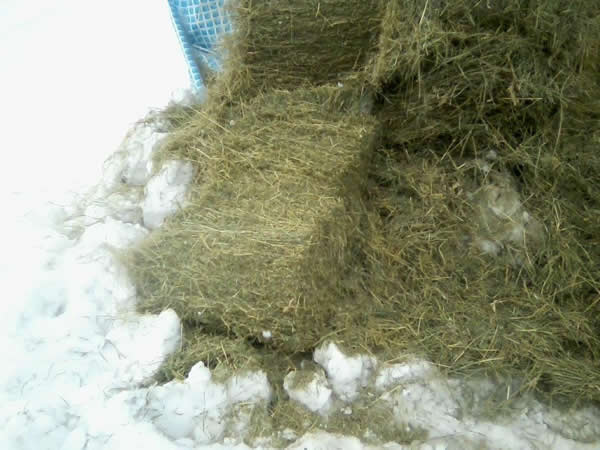 the hay cut open